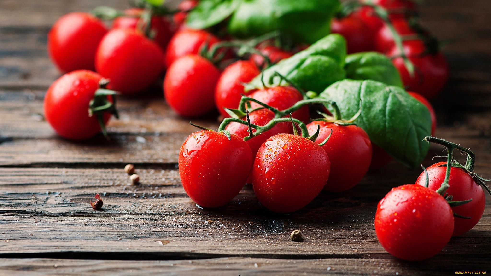 картинки помидоров растение для рабочего стола просто выберите файл